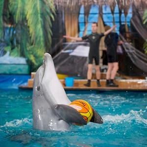 Дельфинарии, океанариумы Шовгеновского