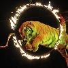 Цирки в Шовгеновском