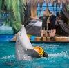 Дельфинарии, океанариумы в Шовгеновском